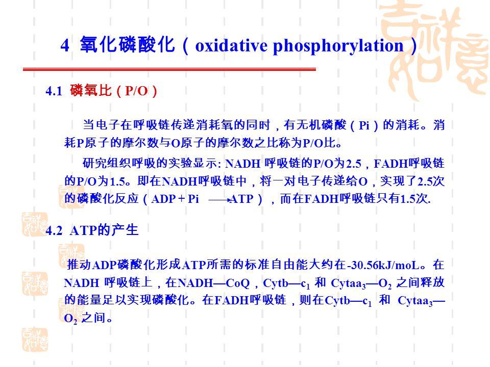 4 氧化磷酸化(oxidative phosphorylation)
