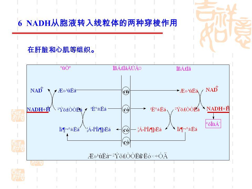 6 NADH从胞液转入线粒体的两种穿梭作用 在肝脏和心肌等组织。