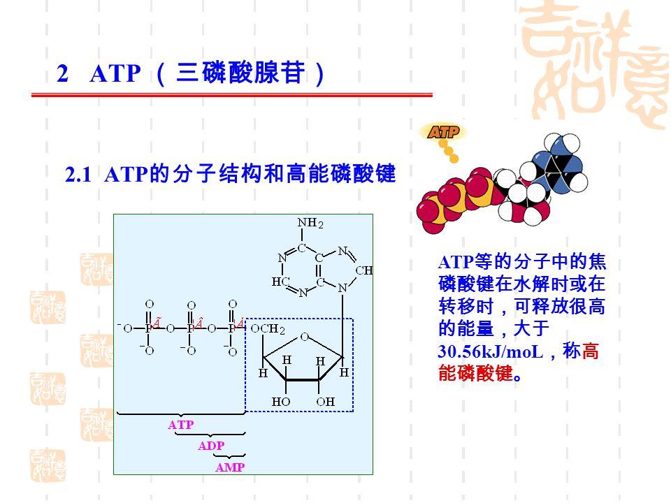 2 ATP (三磷酸腺苷) 2.1 ATP的分子结构和高能磷酸键