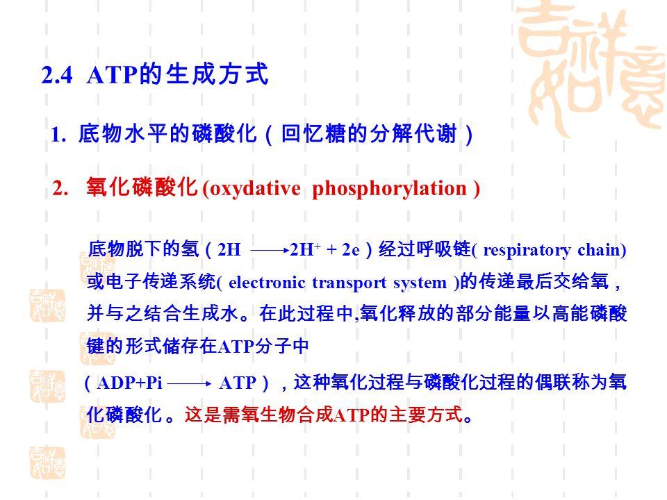 2.4 ATP的生成方式 2. 氧化磷酸化 (oxydative phosphorylation )