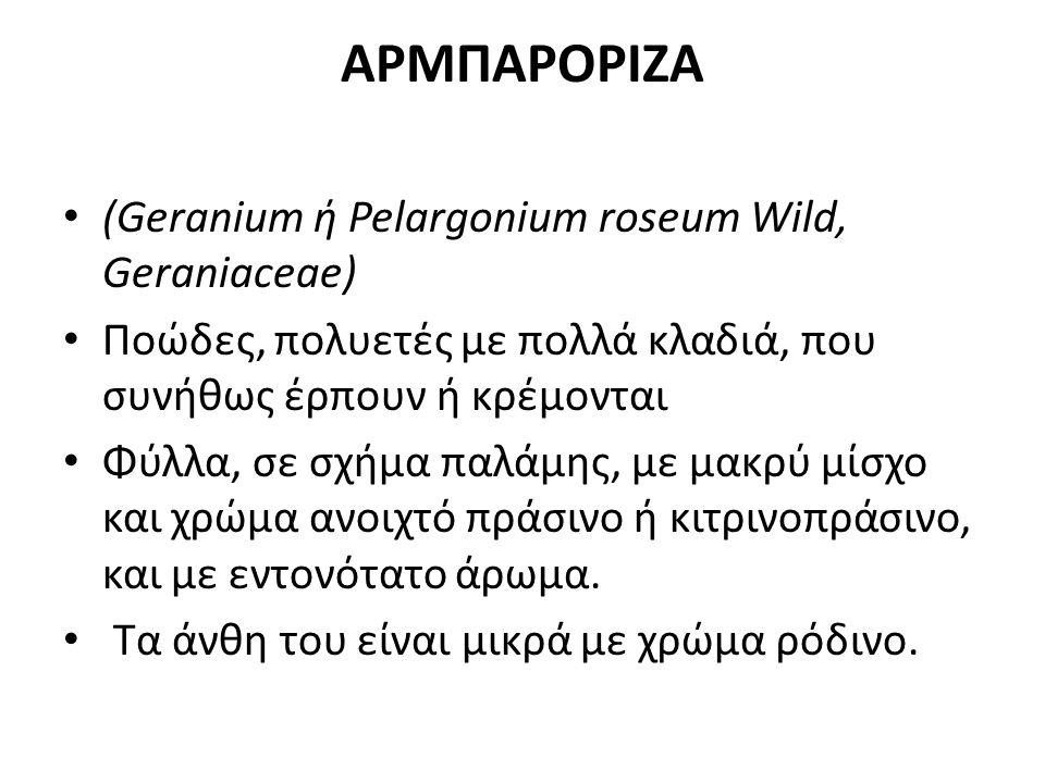 ΑΡΜΠΑΡΟΡΙΖΑ (Geranium ή Pelargonium roseum Wild, Geraniaceae)