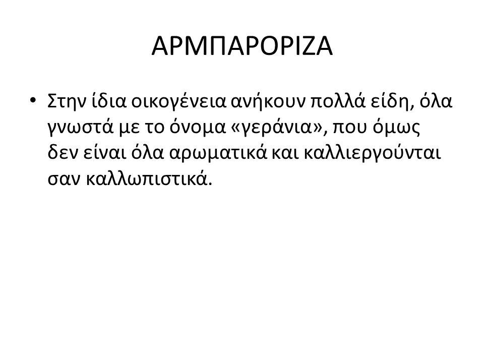 ΑΡΜΠΑΡΟΡΙΖΑ