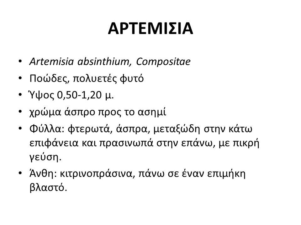 ΑΡΤΕΜΙΣΙΑ Artemisia absinthium, Compositae Ποώδες, πολυετές φυτό