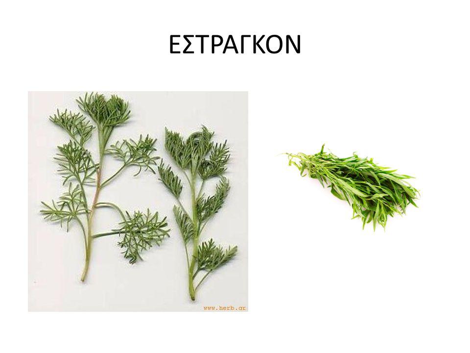 ΕΣΤΡΑΓΚΟΝ