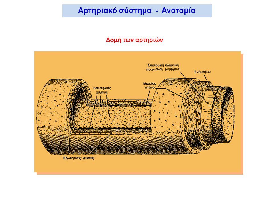 Αρτηριακό σύστημα - Ανατομία