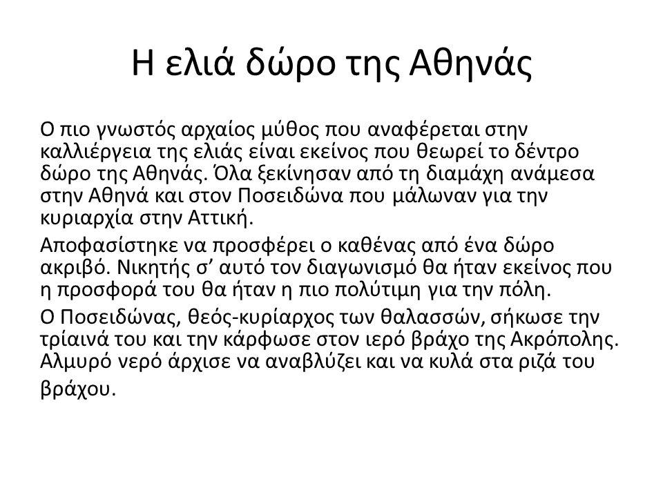 Η ελιά δώρο της Αθηνάς