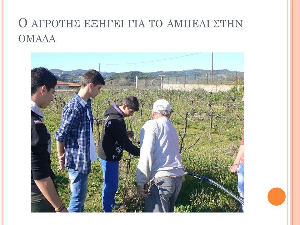 Ο αγροτησ εξηγει για το αμπελι στην ομαδα