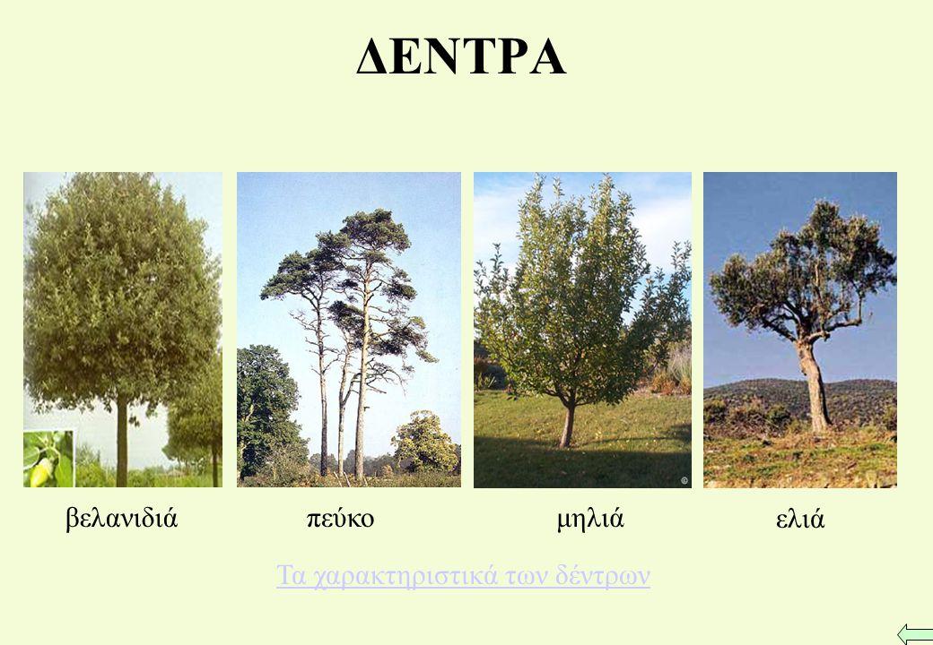 Τα χαρακτηριστικά των δέντρων