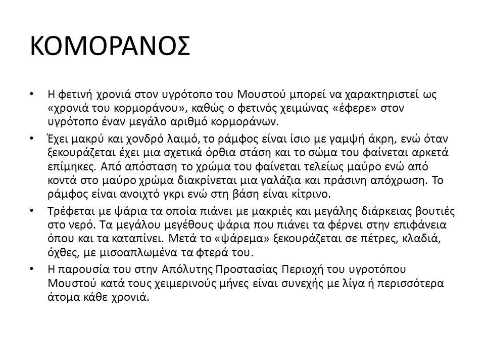 ΚΟΜΟΡΑΝΟΣ