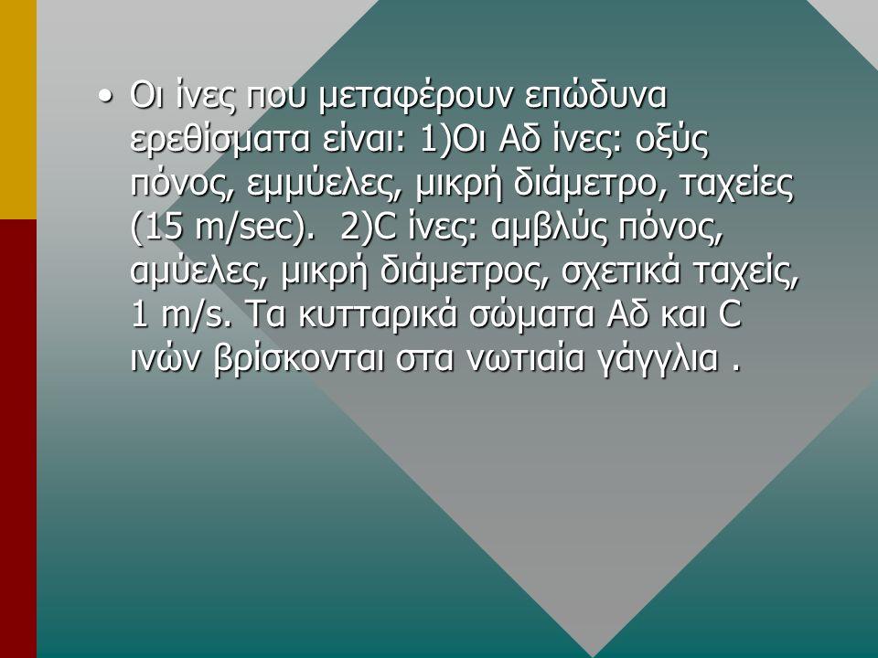 Οι ίνες που μεταφέρουν επώδυνα ερεθίσματα είναι: 1)Οι Αδ ίνες: οξύς πόνος, εμμύελες, μικρή διάμετρο, ταχείες (15 m/sec).