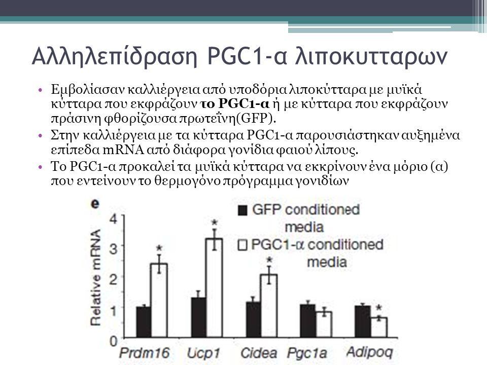 Αλληλεπίδραση PGC1-α λιποκυτταρων