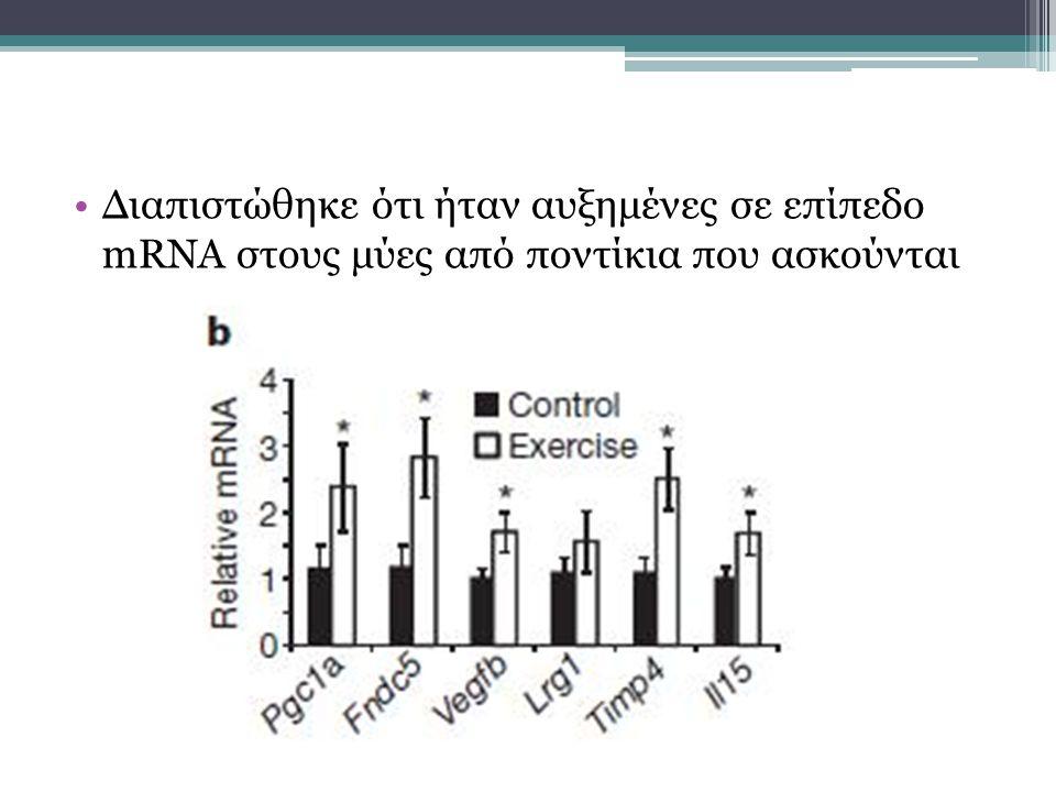 Διαπιστώθηκε ότι ήταν αυξημένες σε επίπεδο mRNA στους μύες από ποντίκια που ασκούνται