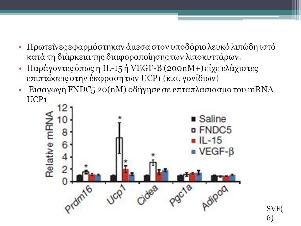 Εισαγωγή FNDC5 20(nΜ) οδήγησε σε επταπλασιασμο του mRNA UCP1