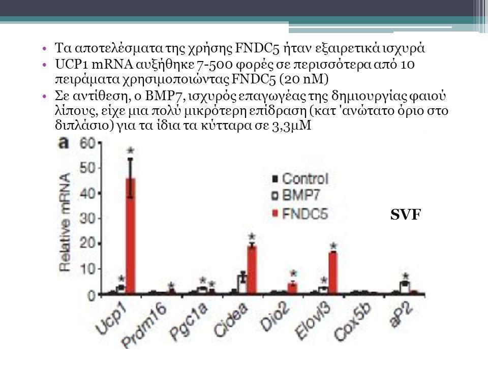 SVF Τα αποτελέσματα της χρήσης FNDC5 ήταν εξαιρετικά ισχυρά