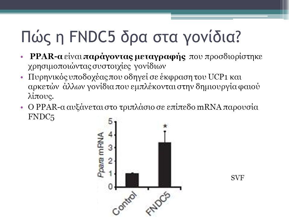 Πώς η FNDC5 δρα στα γονίδια