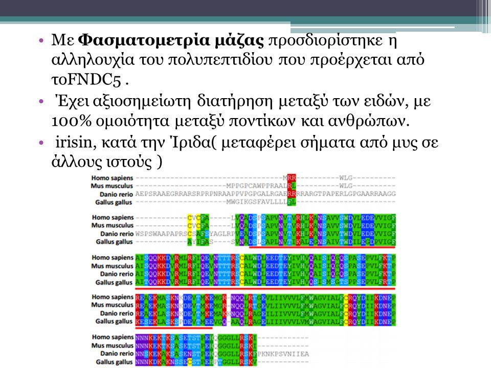 Με Φασματομετρία μάζας προσδιορίστηκε η αλληλουχία του πολυπεπτιδίου που προέρχεται από τοFNDC5 .
