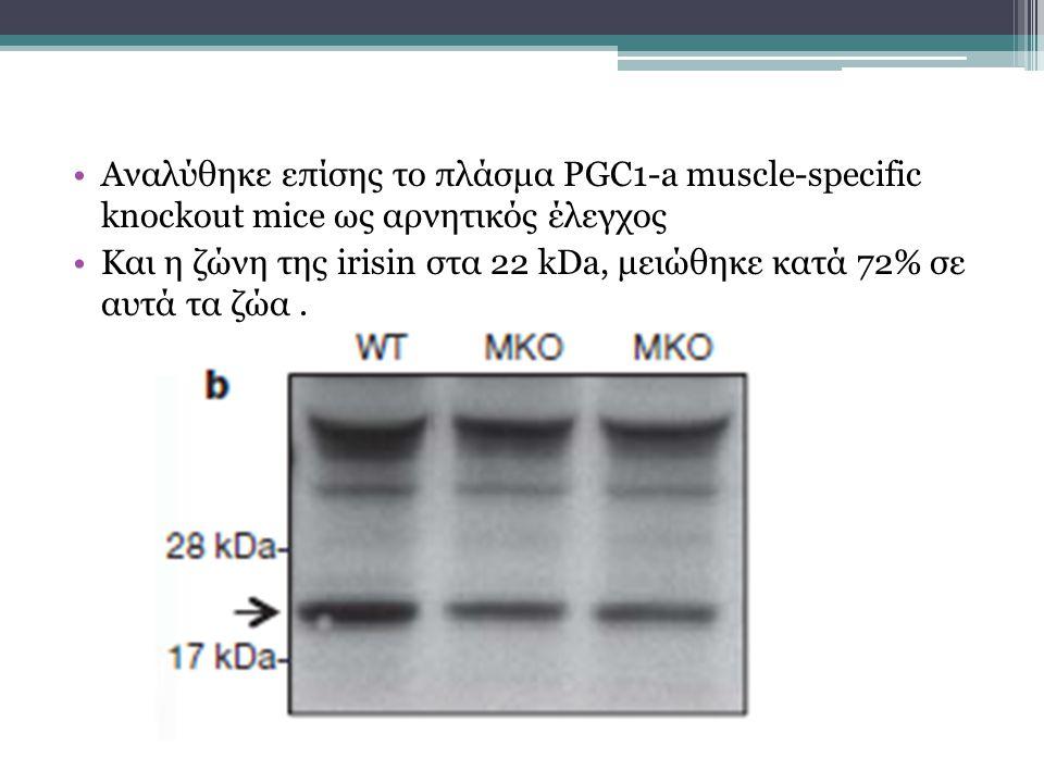 Αναλύθηκε επίσης το πλάσμα PGC1-a muscle-specific knockout mice ως αρνητικός έλεγχος