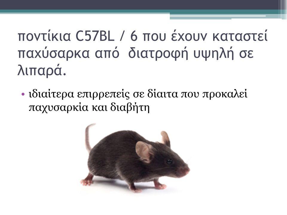 ποντίκια C57BL / 6 που έχουν καταστεί παχύσαρκα από διατροφή υψηλή σε λιπαρά.