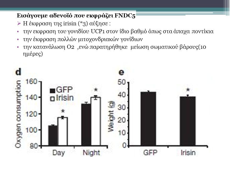 Εισάγουμε αδενοϊό που εκφράζει FNDC5