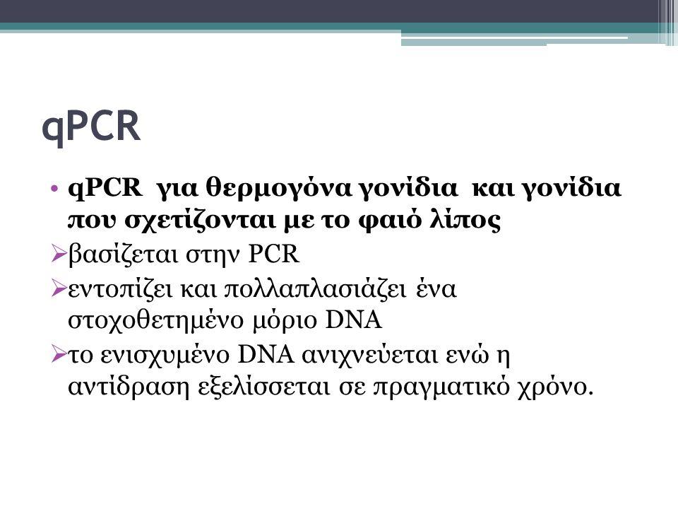 qPCR qPCR για θερμογόνα γονίδια και γονίδια που σχετίζονται με το φαιό λίπος. βασίζεται στην PCR.