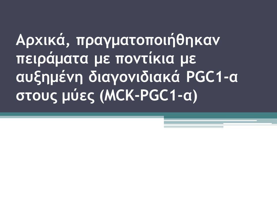 Αρχικά, πραγματοποιήθηκαν πειράματα με ποντίκια με αυξημένη διαγονιδιακά PGC1-α στους μύες (MCK-PGC1-α)