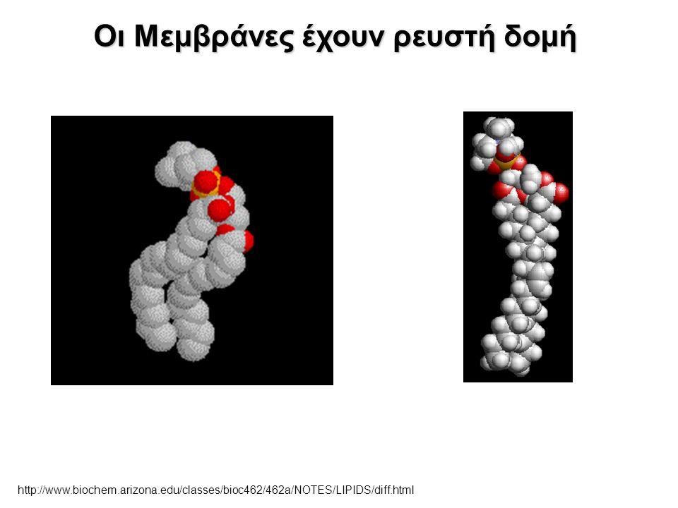 Οι Μεμβράνες έχουν ρευστή δομή