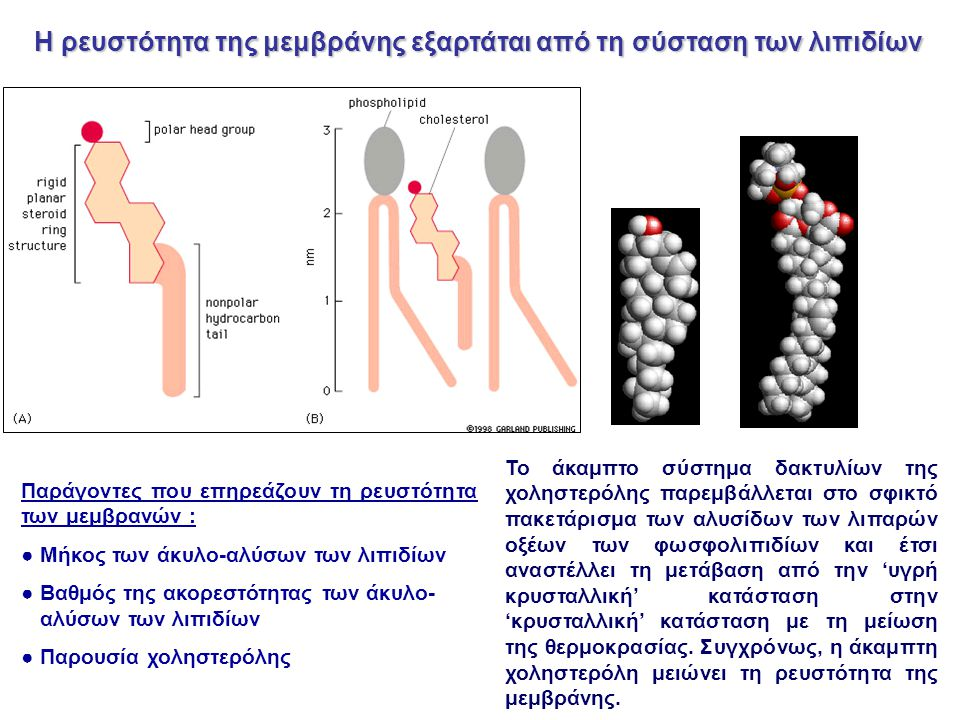 Η ρευστότητα της μεμβράνης εξαρτάται από τη σύσταση των λιπιδίων