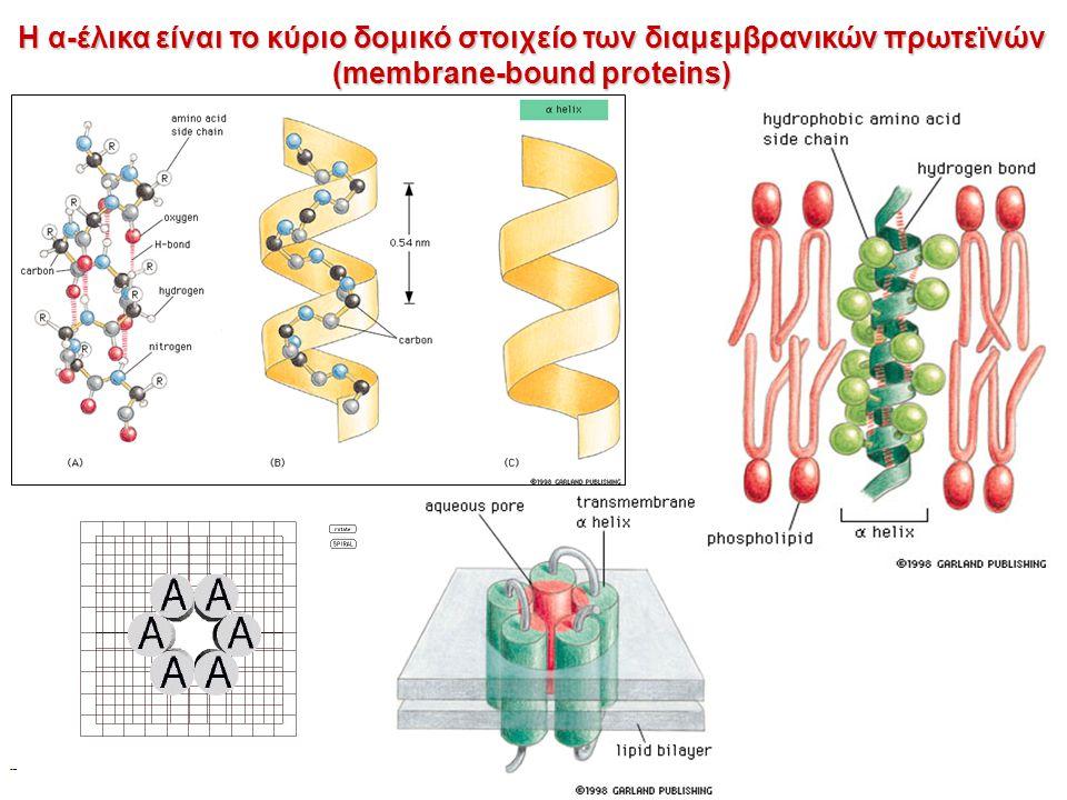 Η α-έλικα είναι το κύριο δομικό στοιχείο των διαμεμβρανικών πρωτεϊνών