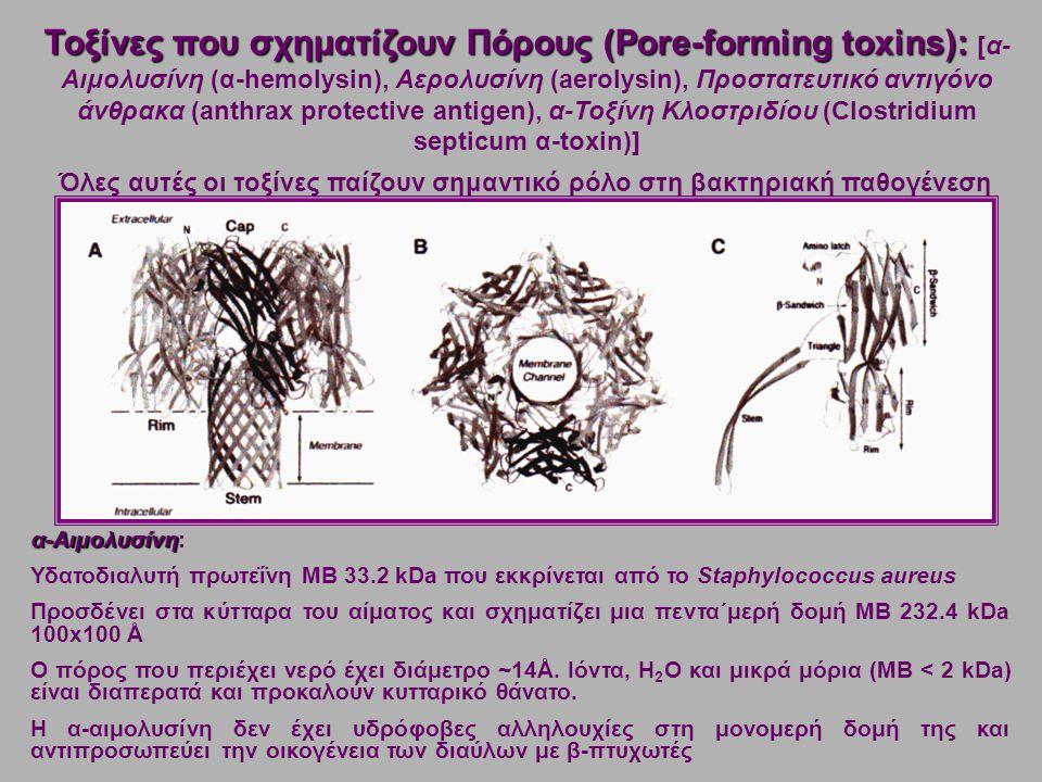 Όλες αυτές οι τοξίνες παίζουν σημαντικό ρόλο στη βακτηριακή παθογένεση