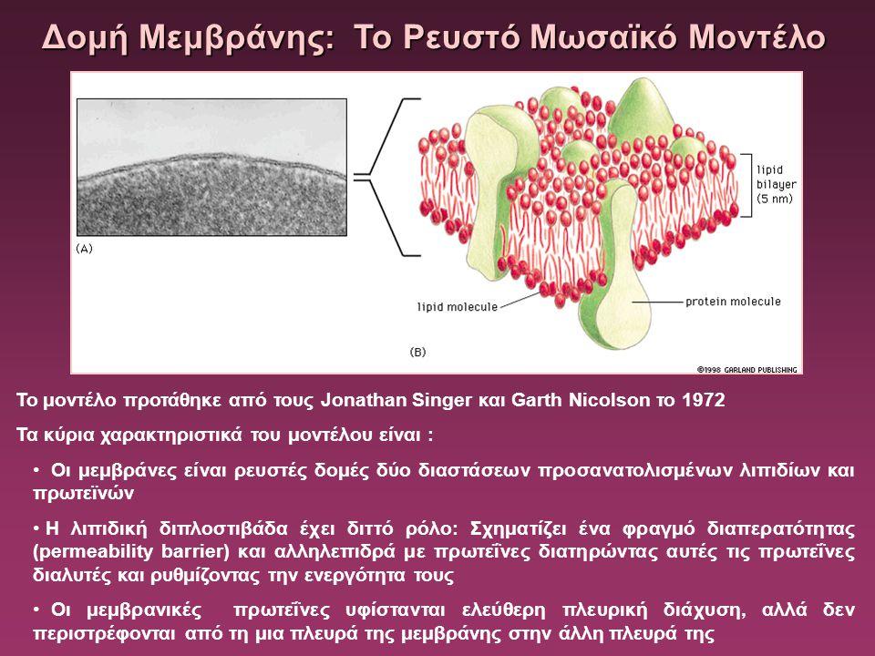 Δομή Μεμβράνης: Το Ρευστό Μωσαϊκό Μοντέλο