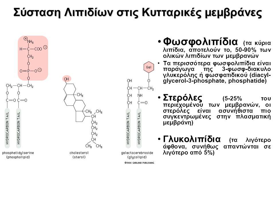 Σύσταση Λιπιδίων στις Κυτταρικές μεμβράνες