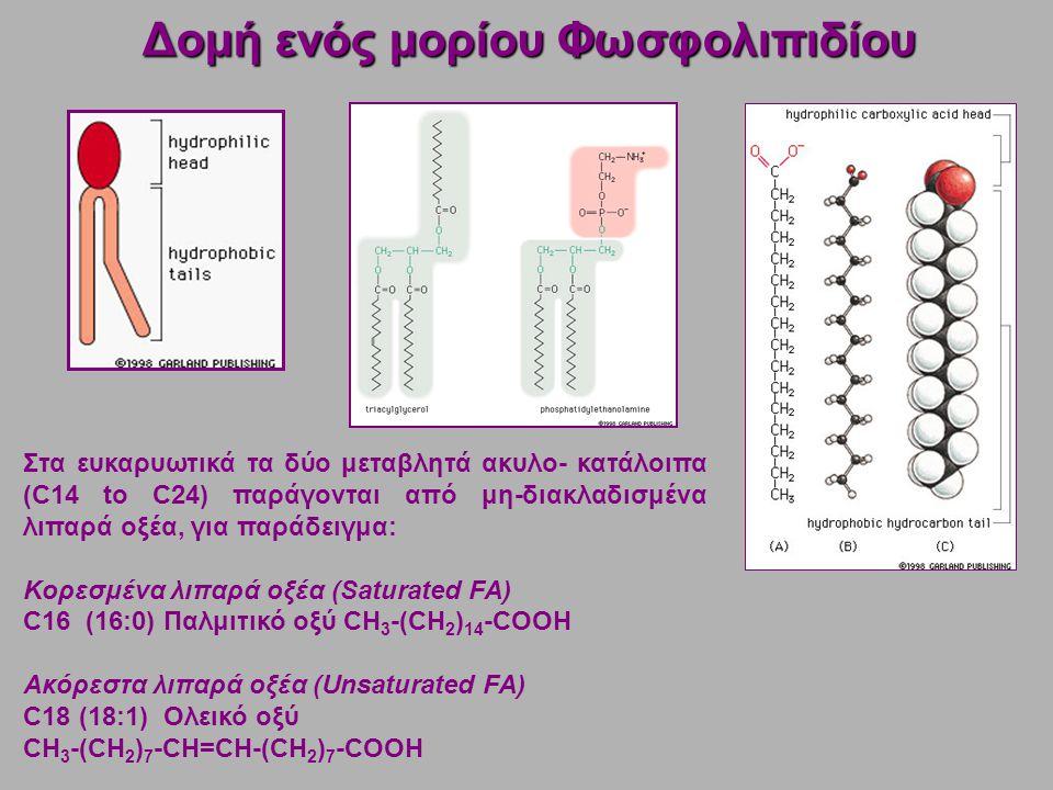 Δομή ενός μορίου Φωσφολιπιδίου