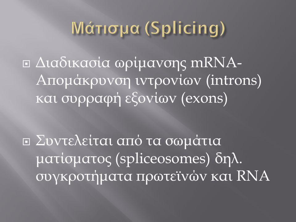 Μάτισμα (Splicing) Διαδικασία ωρίμανσης mRNA- Απομάκρυνση ιντρονίων (introns) και συρραφή εξονίων (exons)