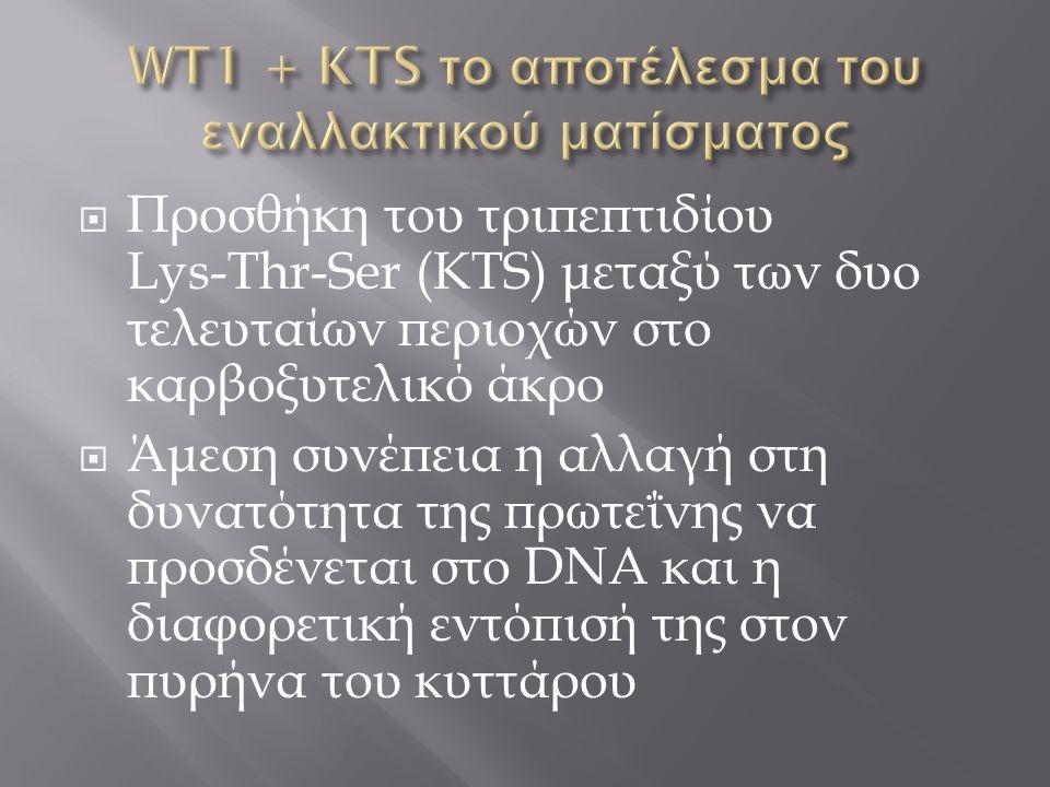 WT1 + KTS το αποτέλεσμα του εναλλακτικού ματίσματος