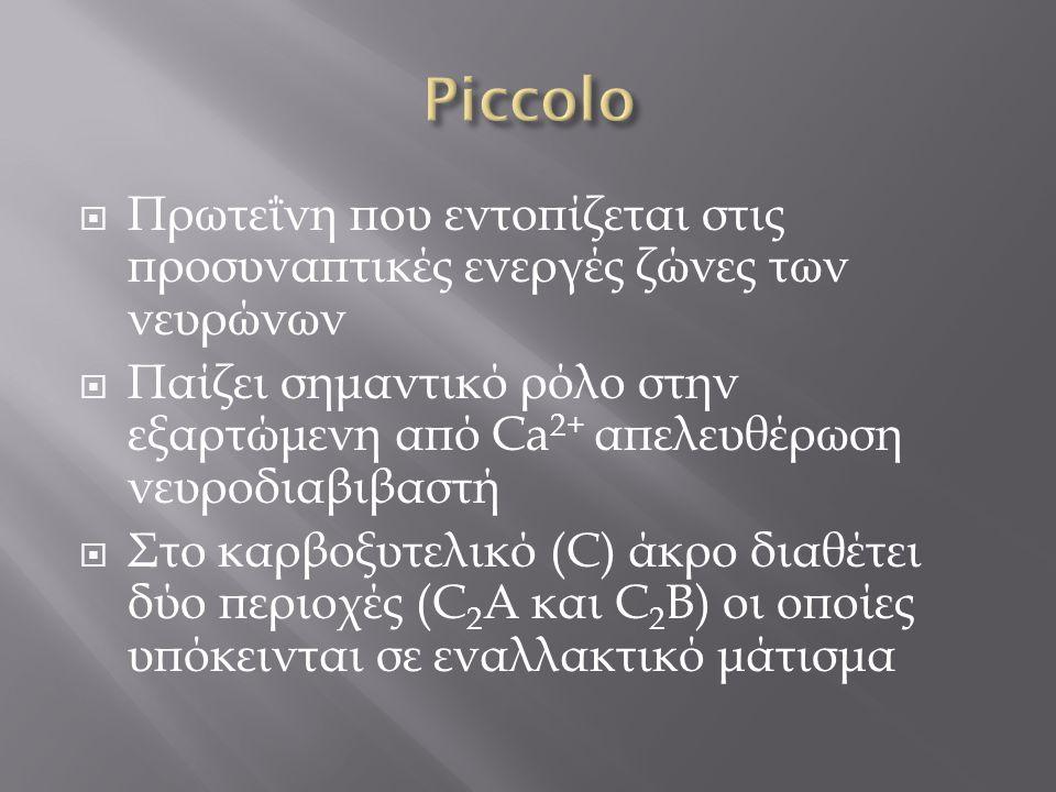 Piccolo Πρωτεΐνη που εντοπίζεται στις προσυναπτικές ενεργές ζώνες των νευρώνων.