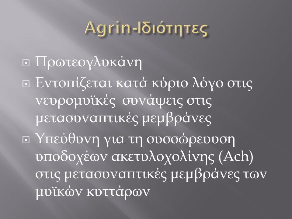 Agrin-Ιδιότητες Πρωτεογλυκάνη