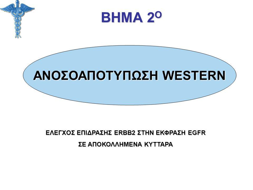 ΒΗΜΑ 2Ο ΑΝΟΣΟΑΠΟΤΥΠΩΣΗ WESTERN