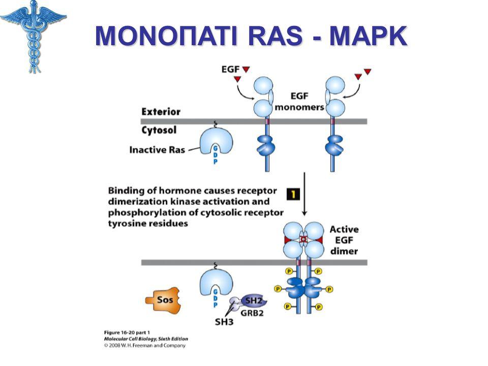 ΜΟΝΟΠΑΤΙ RAS - MAPK