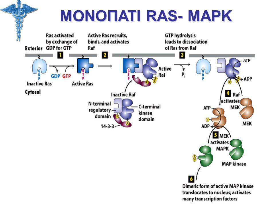 ΜΟΝΟΠΑΤΙ RAS- MAPK