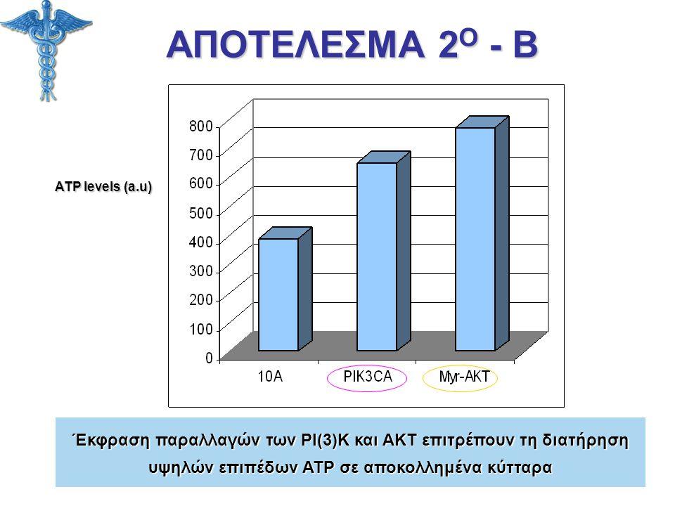 ΑΠΟΤΕΛΕΣΜΑ 2Ο - Β ATP levels (a.u) Έκφραση παραλλαγών των PI(3)K και AKT επιτρέπουν τη διατήρηση.