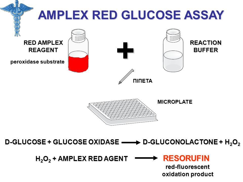 + AMPLEX RED GLUCOSE ASSAY