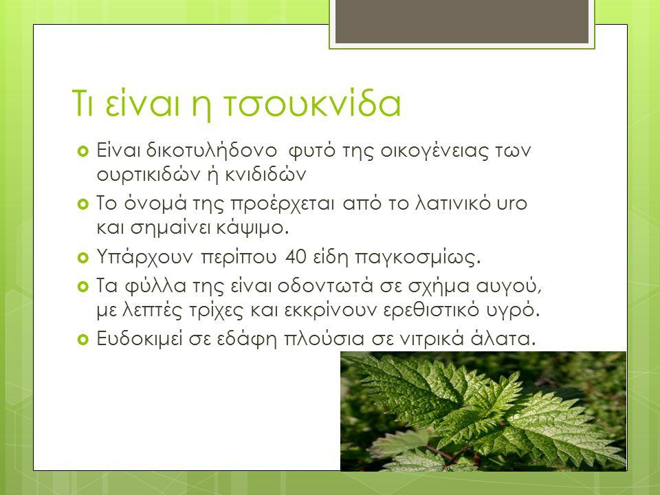 Τι είναι η τσουκνίδα Είναι δικοτυλήδονο φυτό της οικογένειας των ουρτικιδών ή κνιδιδών.