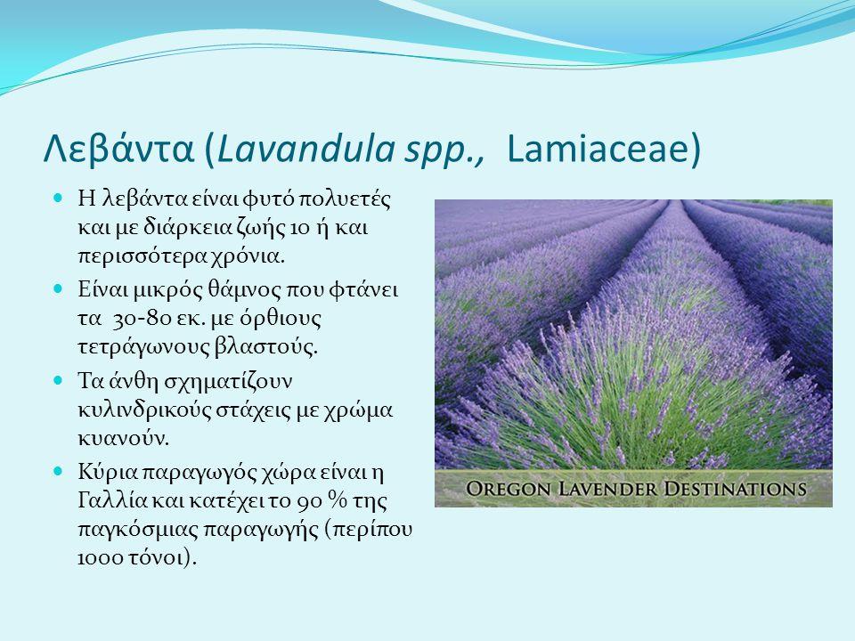 Λεβάντα (Lavandula spp., Lamiaceae)