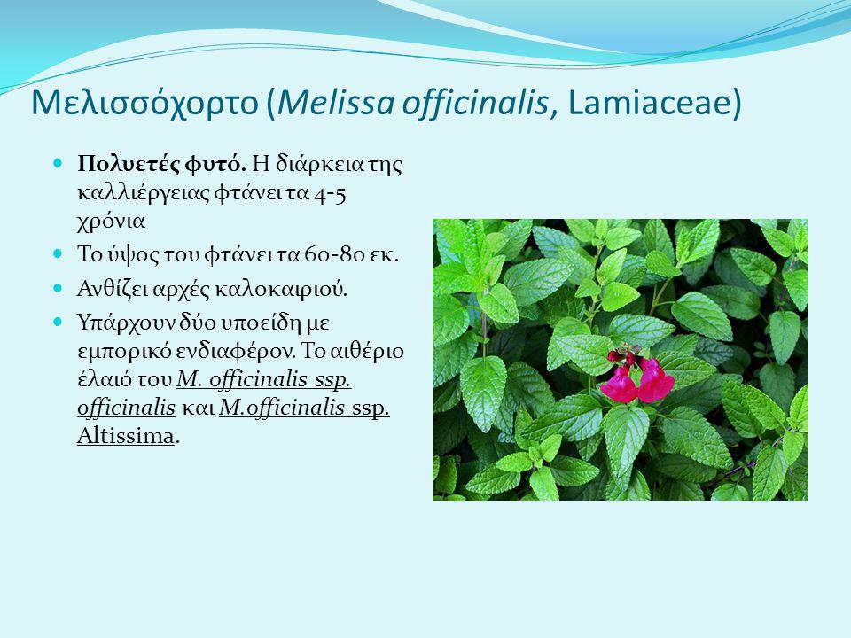 Μελισσόχορτο (Melissa officinalis, Lamiaceae)
