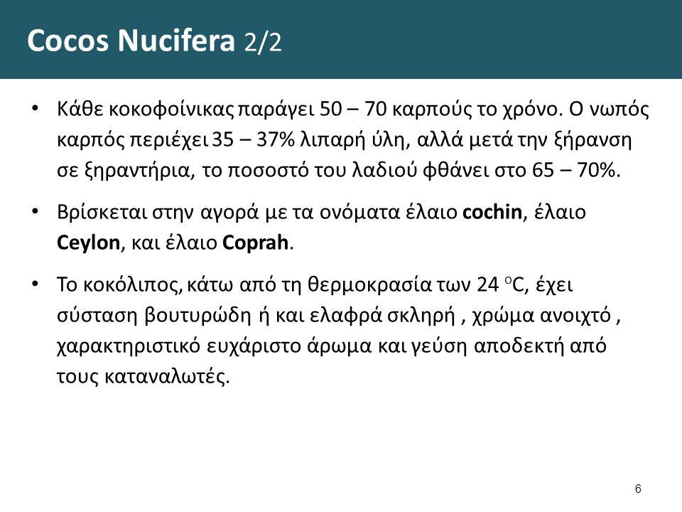 Καρπός του φοινικόδεντρου Cocos nucifera