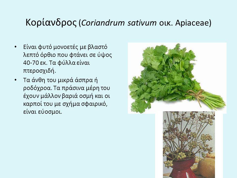Kορίανδρος (Coriandrum sativum οικ. Apiaceae)