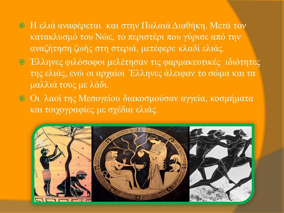 Η ελιά αναφέρεται και στην Παλαιά Διαθήκη