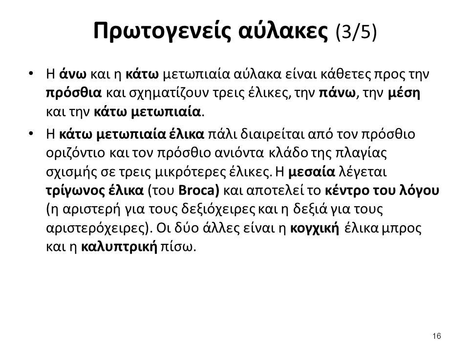 Πρωτογενείς αύλακες (4/5)