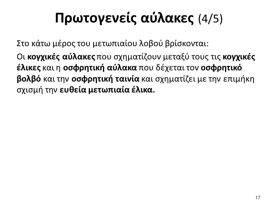 Πρωτογενείς αύλακες (5/5)