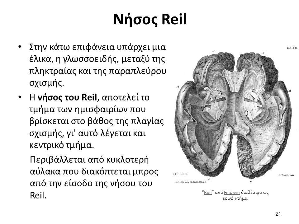 Ημισφαίρια και νευρικές ίνες